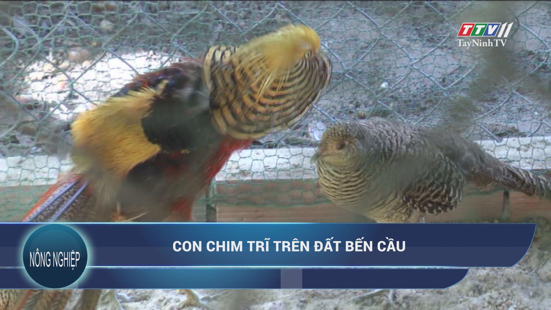 Con chim trĩ trên đất Bến Cầu | NÔNG NGHIỆP TÂY NINH | TayNinhTV