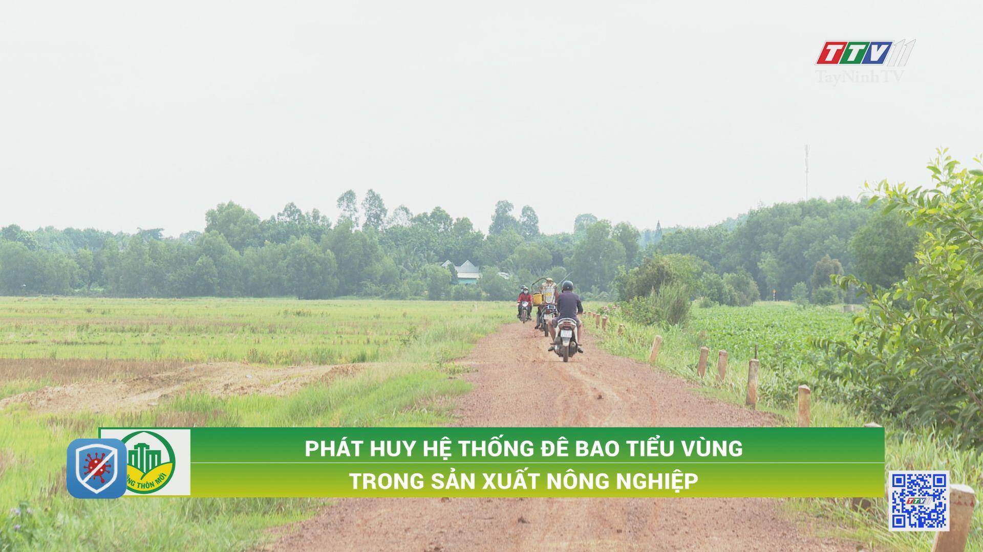 Phát huy hệ thống đê bao tiểu vùng trong sản xuất nông nghiệp | TÂY NINH XÂY DỰNG NÔNG THÔN MỚI | TayNinhTV