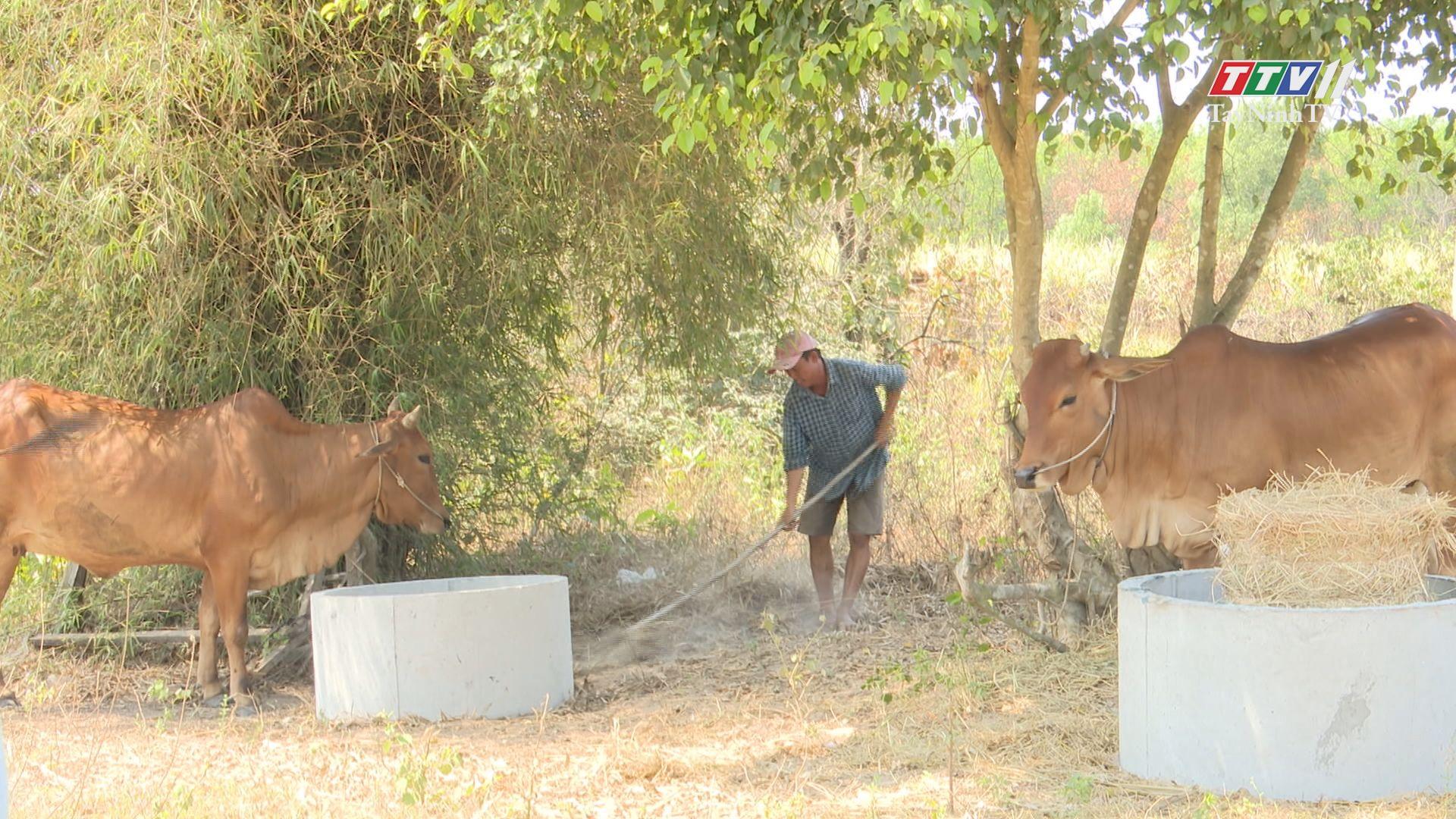 Bến Cầu chủ động phòng chống dịch bệnh cho đàn gia súc, gia cầm | THÔNG TIN TỪ CƠ SỞ | TayNinhTV