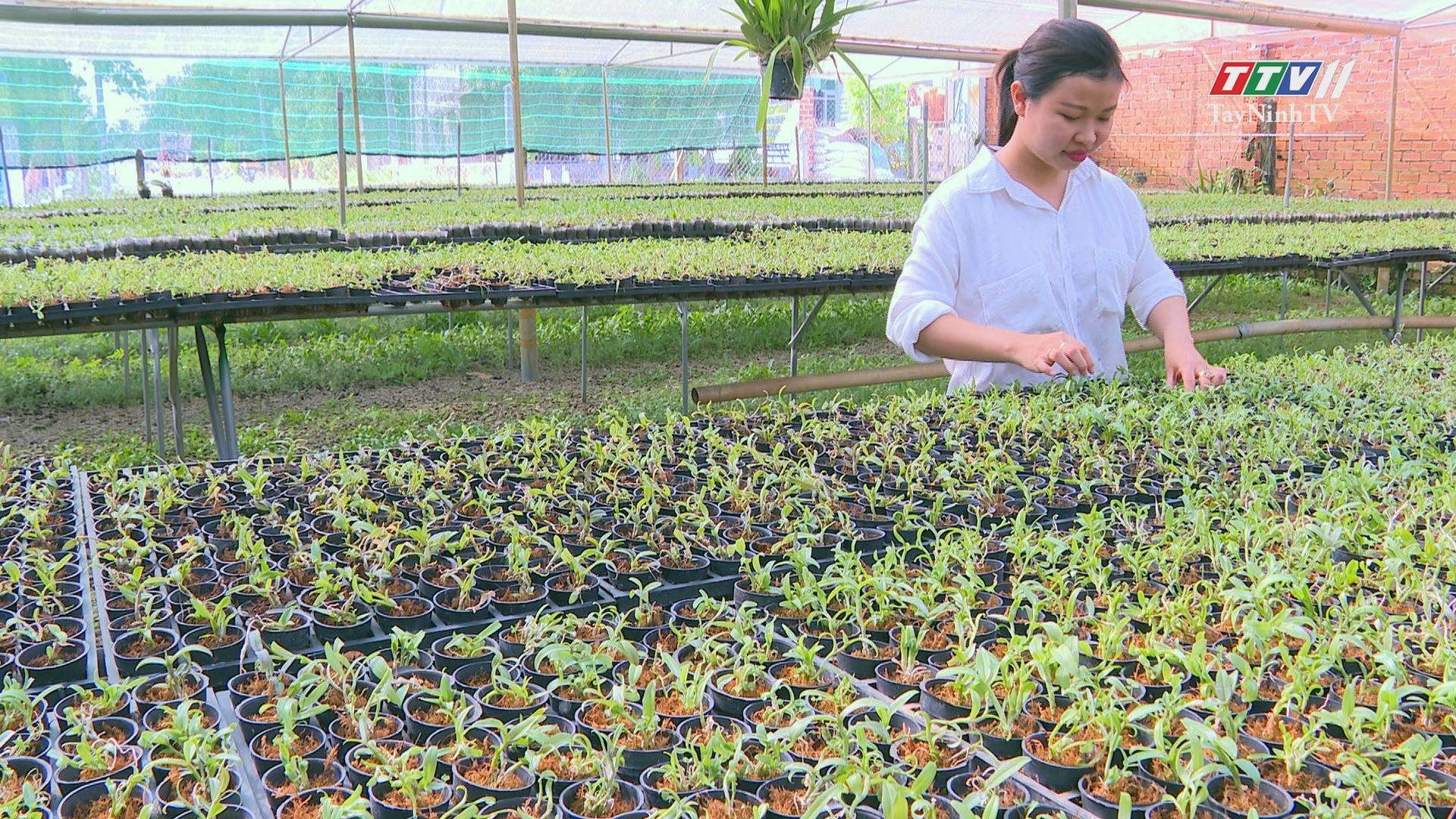 Làm giàu từ mô hình nuôi lan cấy mô | THI ĐUA ÁI QUỐC | TayNinhTV