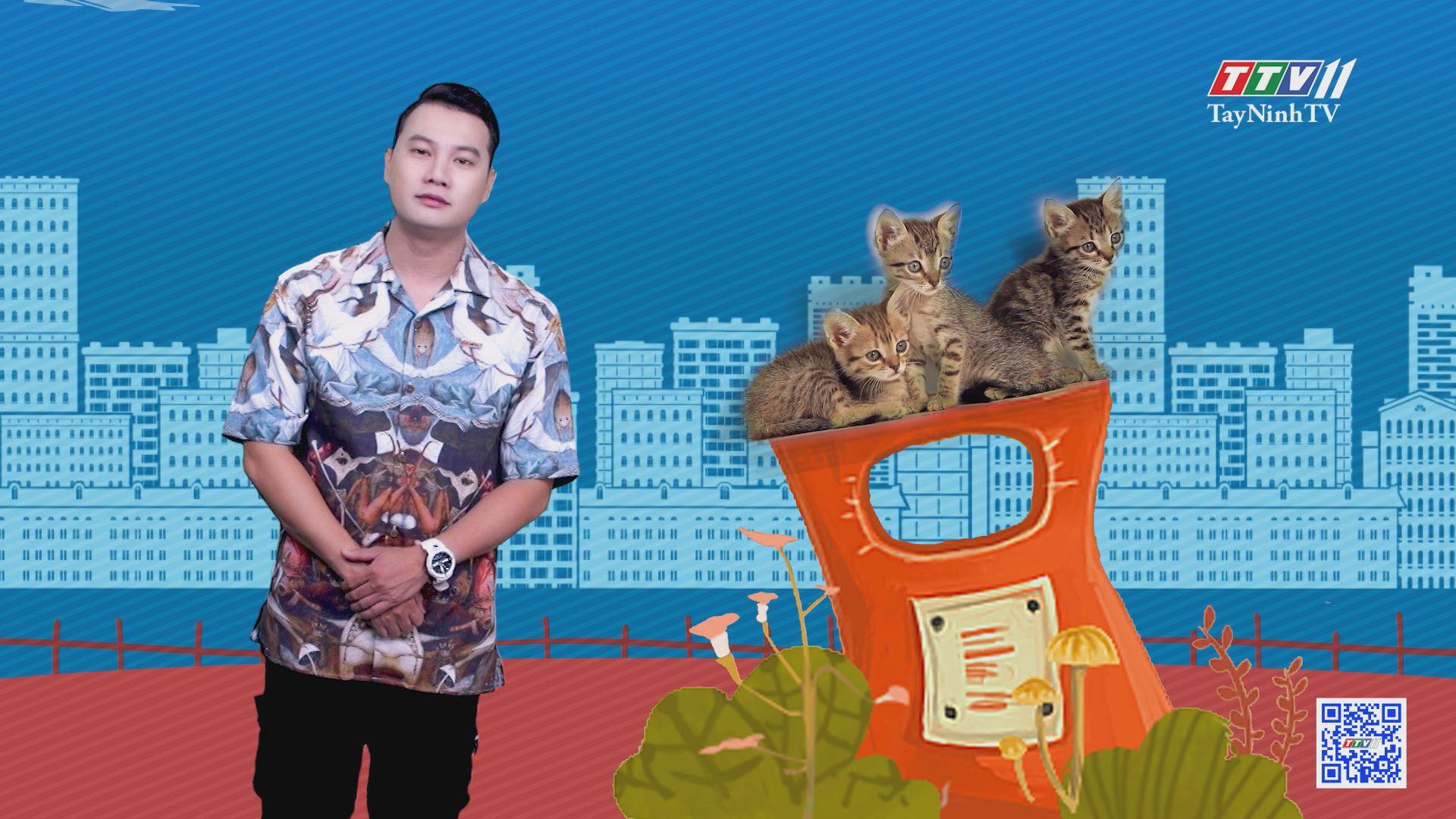 Thiên đường dành cho mèo hoang | CHUYỆN ĐÔNG TÂY KỲ THÚ | TayNinhTV
