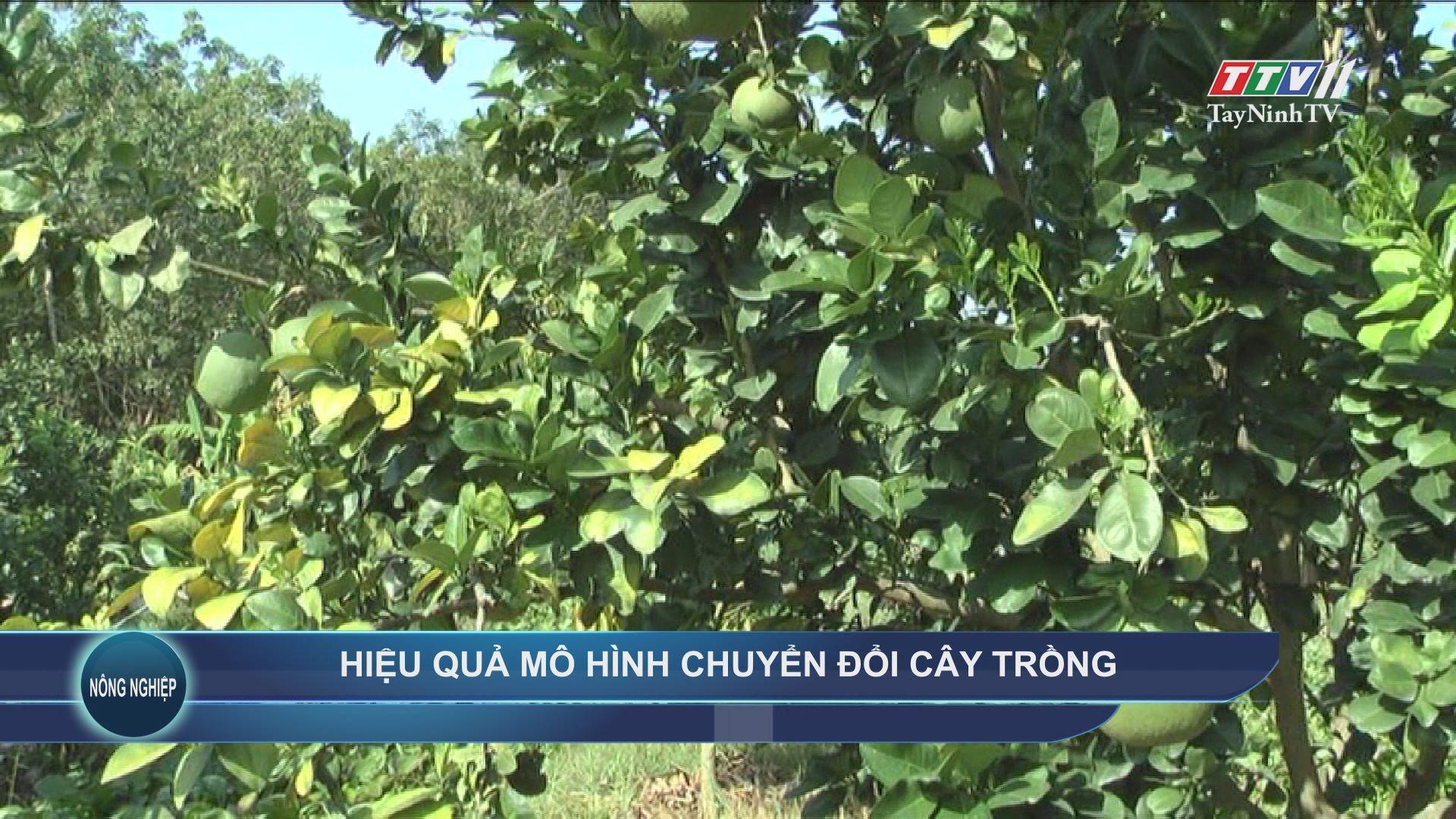 Hiệu quả mô hình chuyển đổi cây trồng | NÔNG NGHIỆP TÂY NINH | TayNinhTV