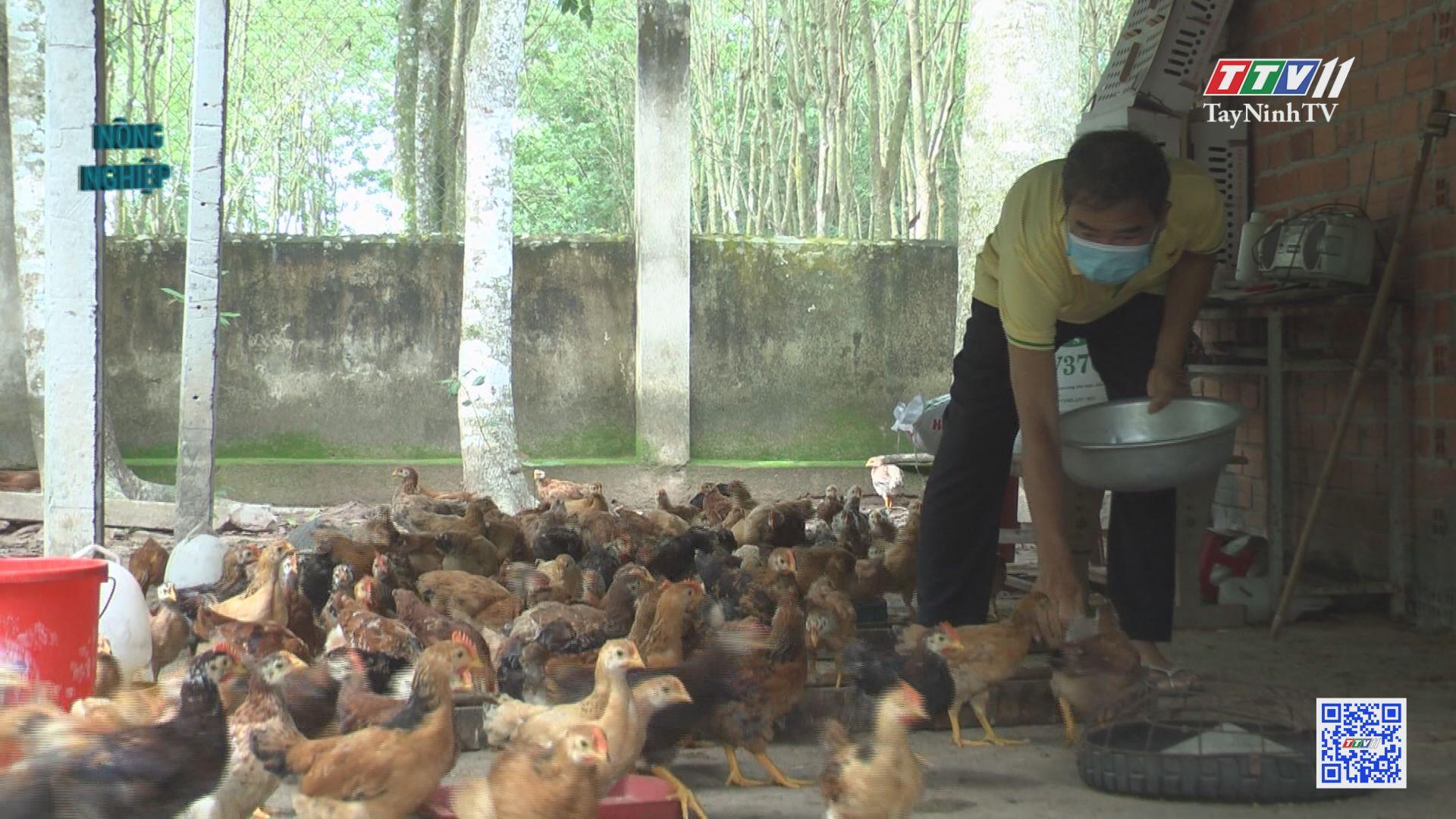 Nuôi gà thịt theo hướng an toàn sinh học | NÔNG NGHIỆP TÂY NINH | TayNinhTV