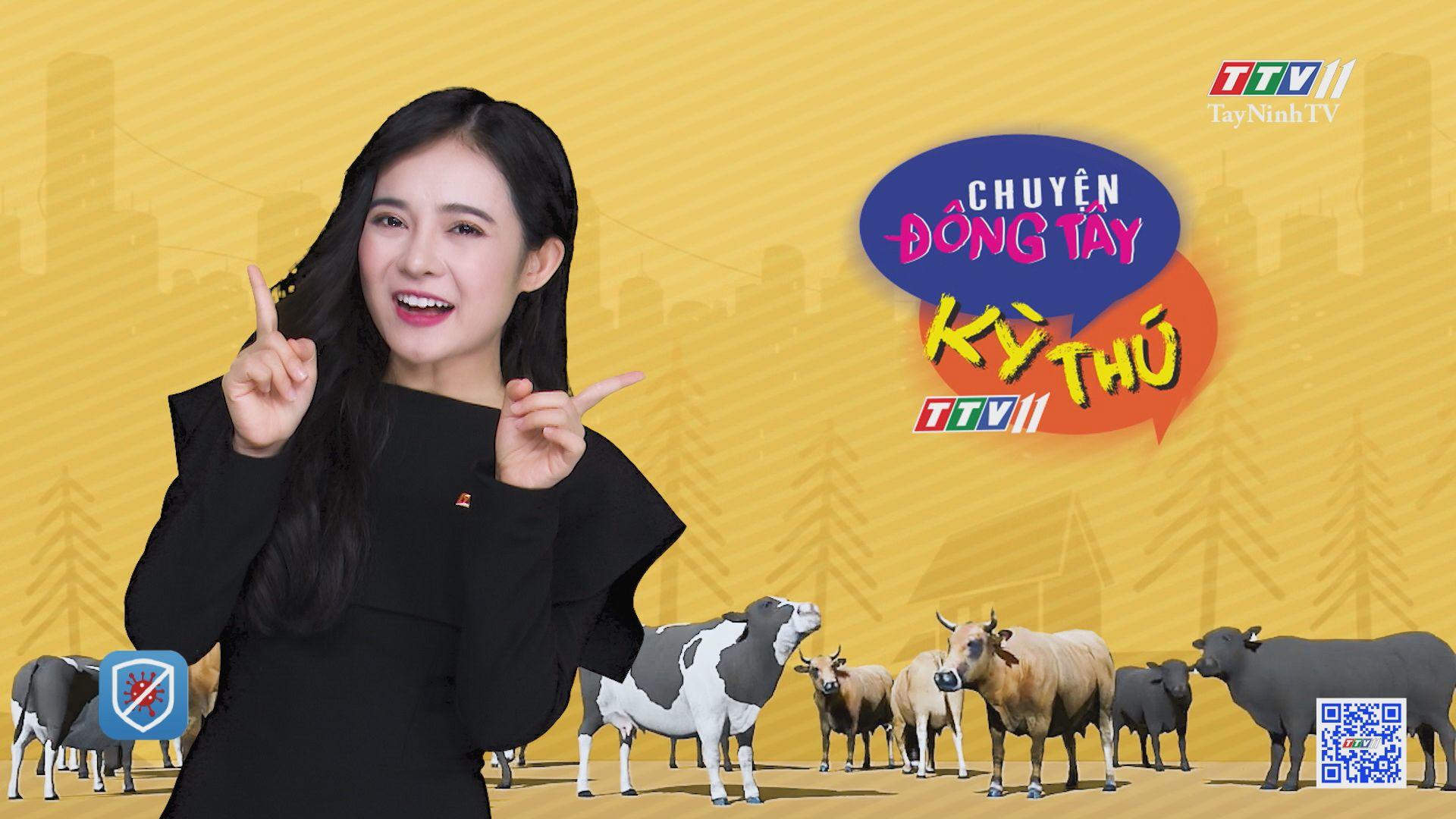 Chú nghé với 2 đầu và 3 con mắt | CHUYỆN ĐỘNG TÂY KỲ THÚ | TayNinhTV