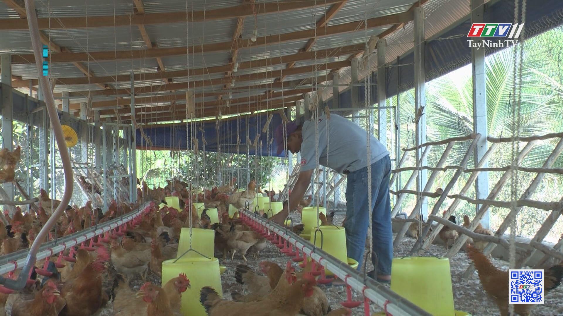 Chăn nuôi an toàn sinh học góp phần phòng cúm gia cầm | NÔNG NGHIỆP TÂY NINH | TayNinhTV