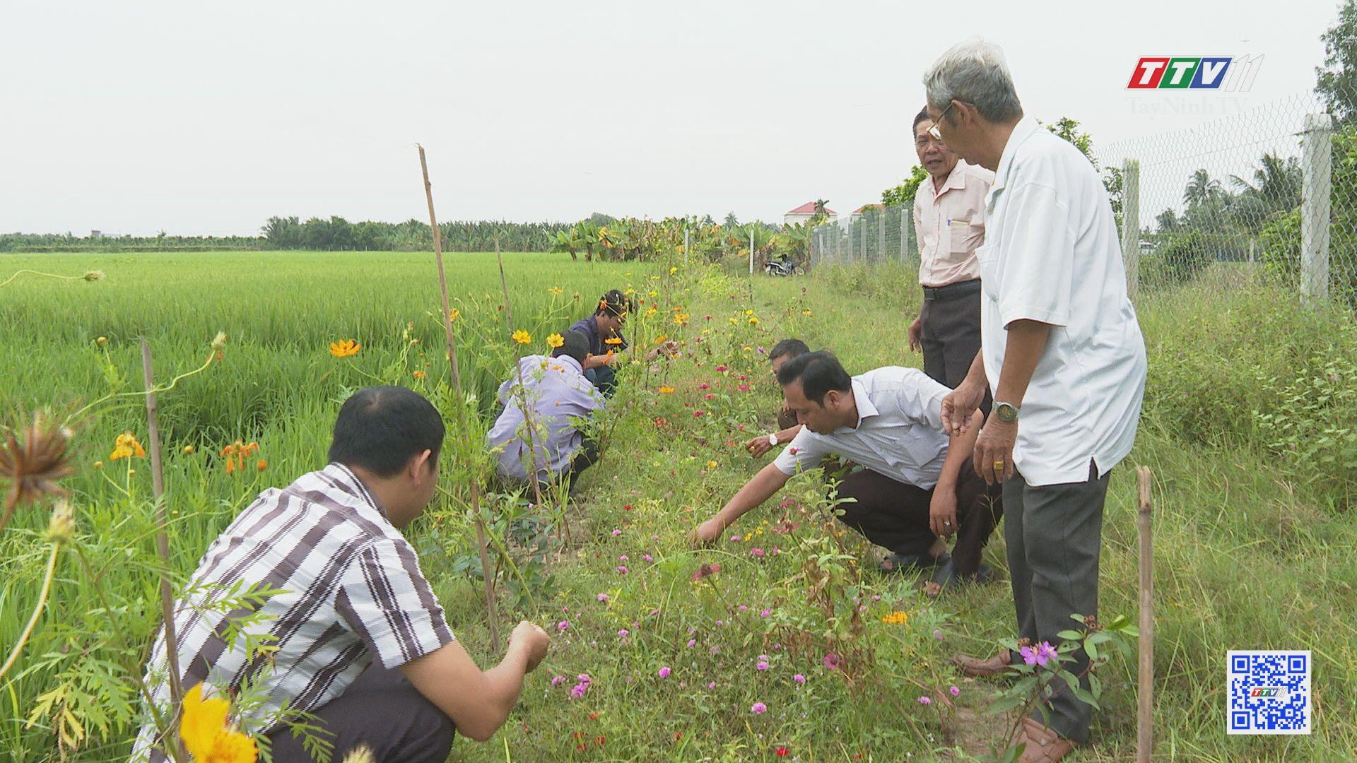 Phát triển sản xuất nông nghiệp gắn với bảo vệ môi trường | TÂY NINH XÂY DỰNG NÔNG THÔN MỚI | TayNinhTV