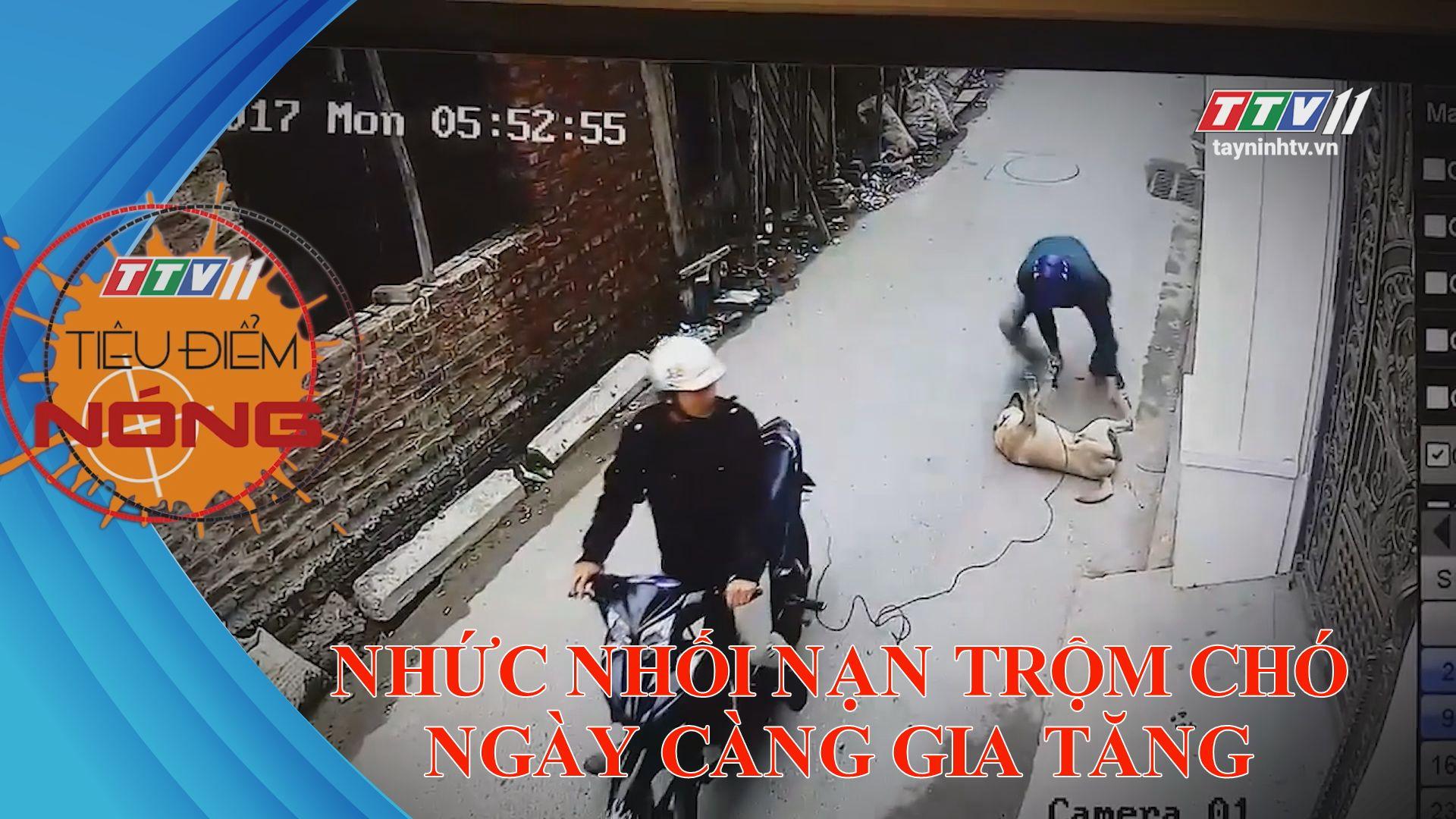 Nhức nhối nạn trộm chó ngày càng gia tăng | TIÊU ĐIỂM NÓNG | TayNinhTV