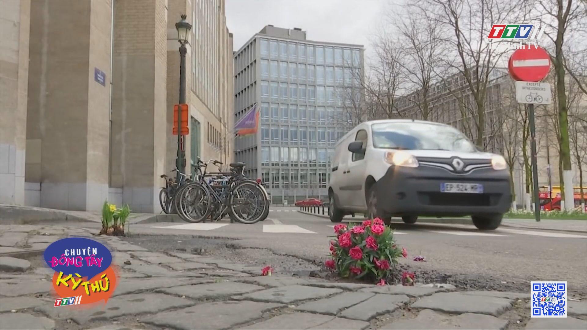 Trồng hoa lấp đầy ổ gà trên đường | CHUYỆN ĐÔNG TÂY KỲ THÚ | TayNinhTV
