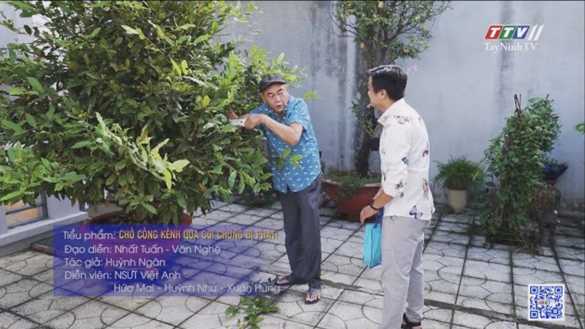 TayNinhTV | Văn hóa giao thông | Chở cồng kềnh quá coi chừng bị phạt