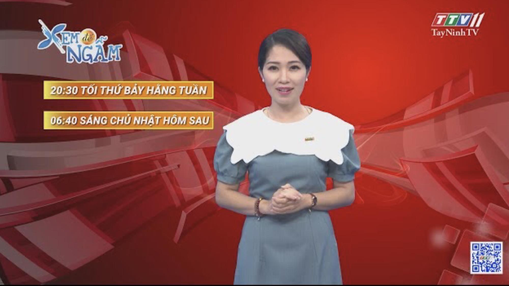 Mất cả chì lẫn chài | XEM ĐỂ NGẪM | TayNinhTVE