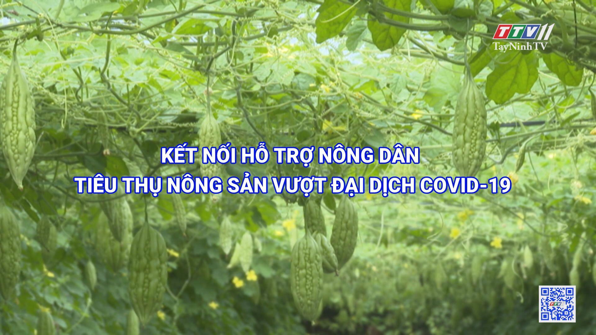 Kết nối hỗ trợ nông dân tiêu thụ nông sản vượt qua đại dịch Covid-19 | TIẾNG NÓI CỬ TRI | TayNinhTV