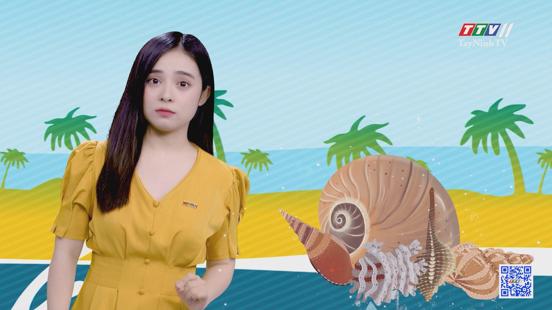 Hòn đảo nhân tạo làm từ ốc xà cừ | CHUYỆN ĐÔNG TÂY KỲ THÚ | TayNinhTV