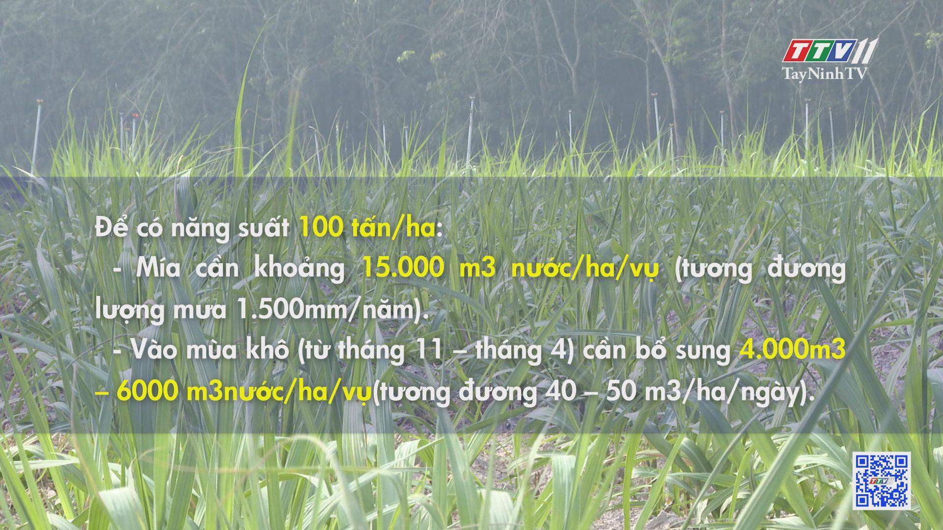 Chương trình khuyến nông vụ trồng 2020-2021 của TTCS | CÂY MÍA VIỆT | TayNinhTV