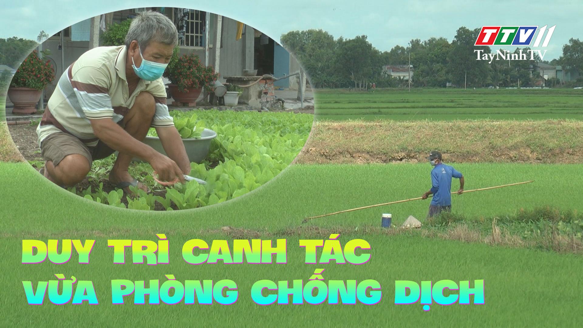 Duy trì canh tác trong giai đoạn phòng chống dịch | NÔNG NGHIỆP TÂY NINH | TayNinhTV