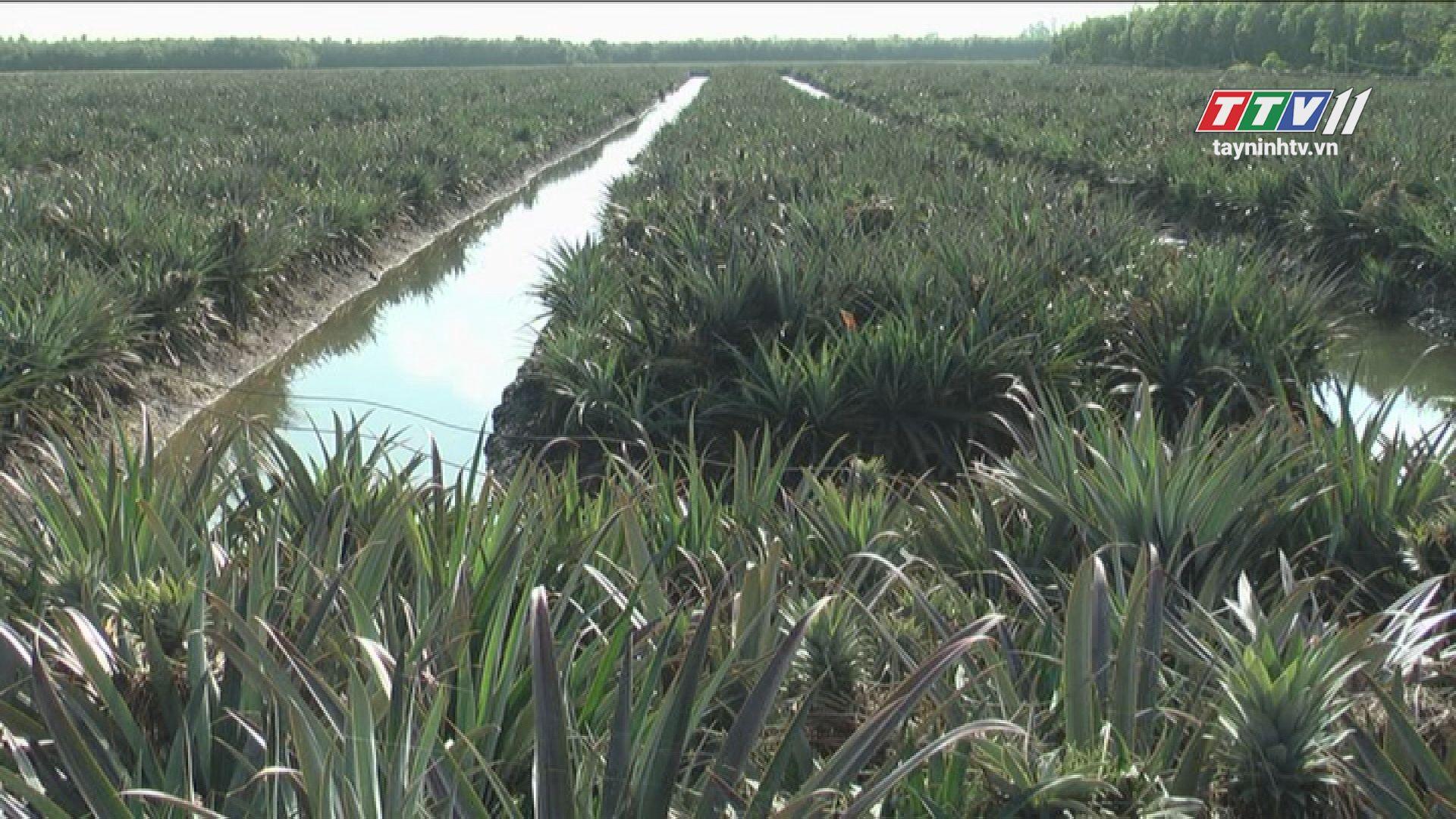 Nông nghiệp Tây Ninh từng bước ứng dụng công nghệ cao | NÔNG NGHIỆP TÂY NINH | TayNinhTV