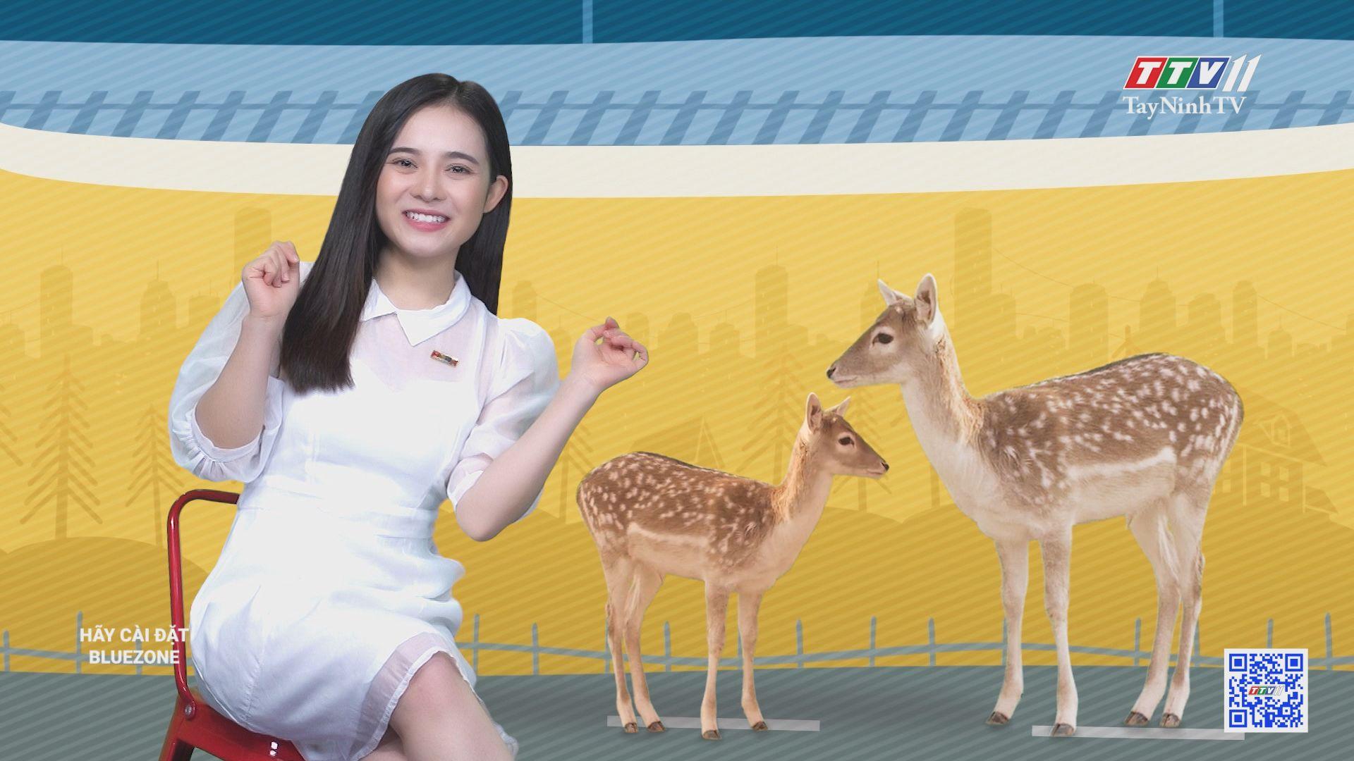 Thành phố của những con hươu sao | CHUYỆN ĐÔNG TÂY KỲ THÚ | TayNinhTV