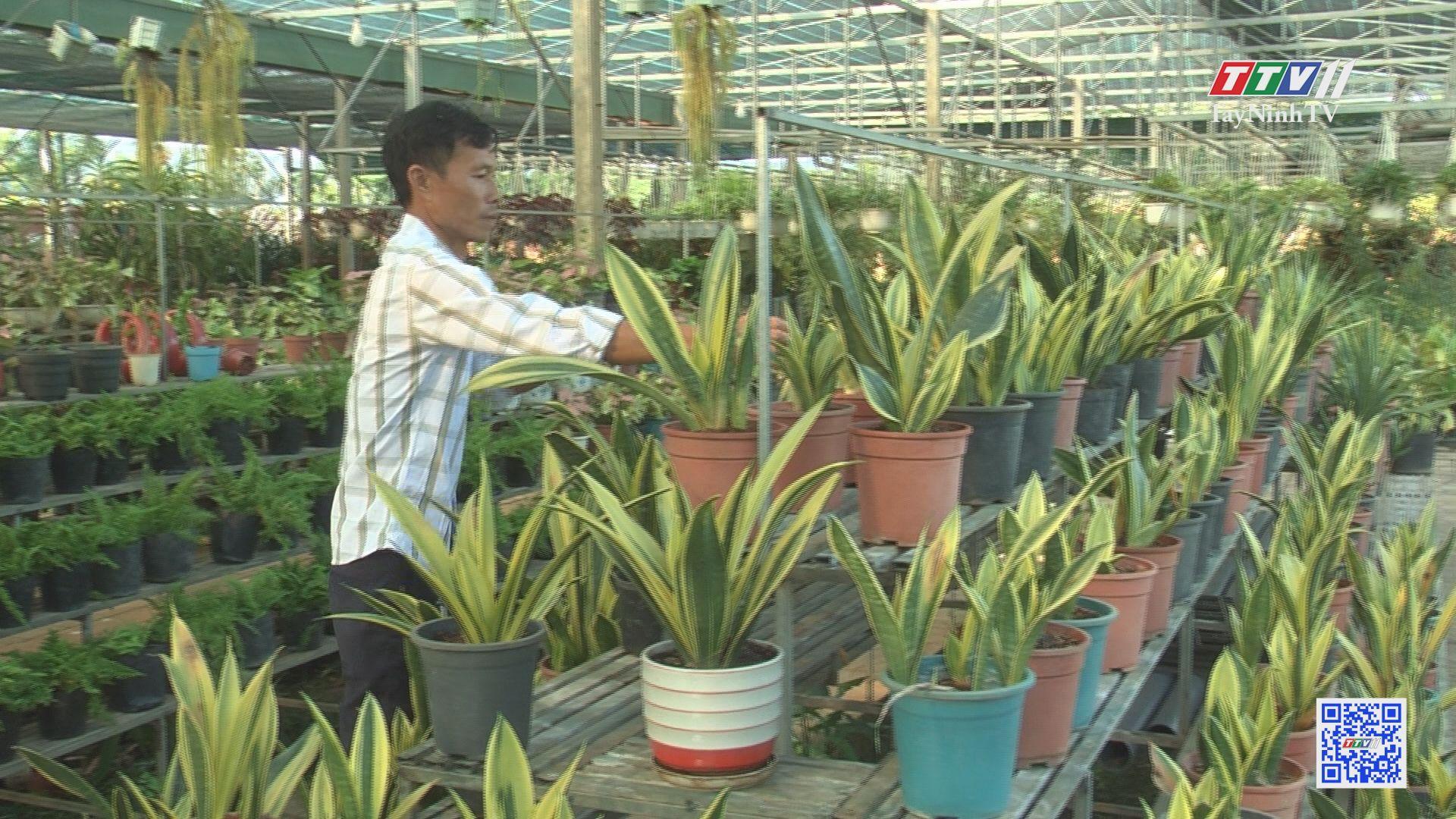 Nông dân với nghề hoa kiểng | NÔNG NGHIỆP TÂY NINH | TayNinhTV