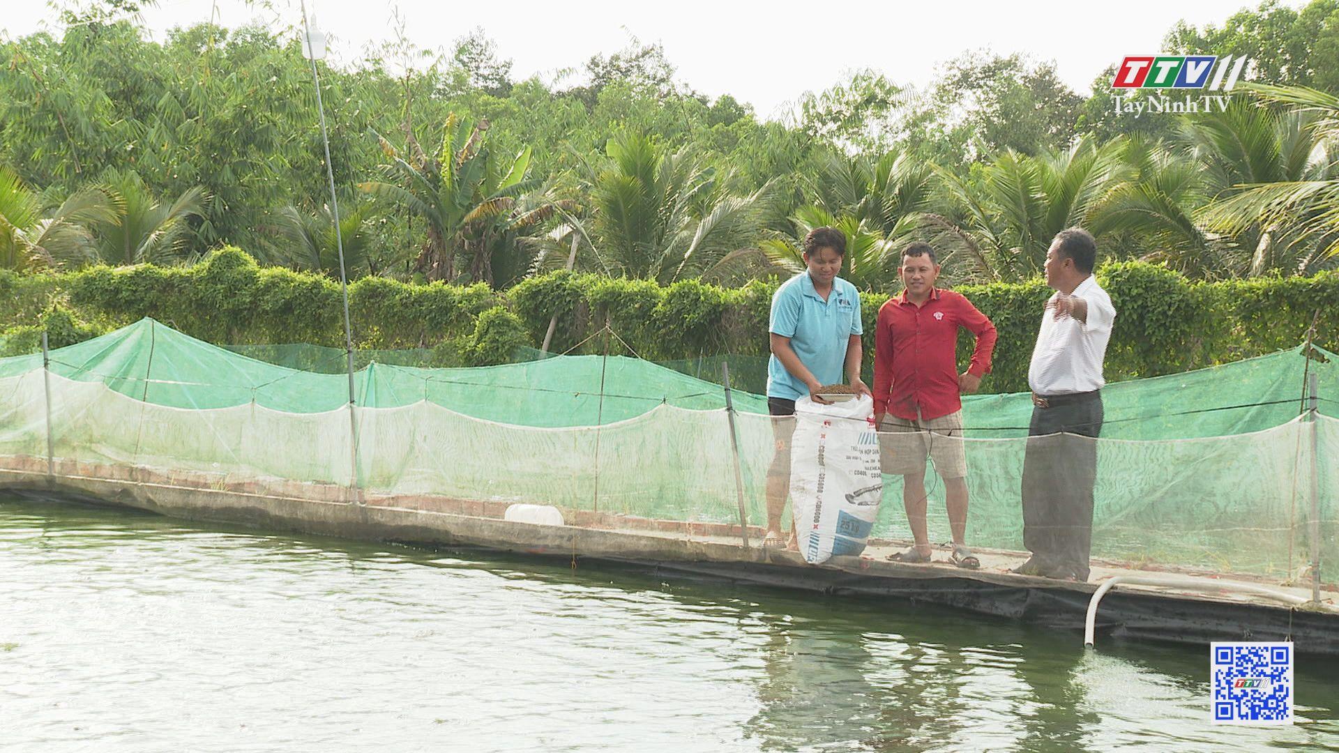 Phát huy vai trò hợp tác xã trong xây dựng nông thôn mới | TÂY NINH XÂY DỰNG NÔNG THÔN MỚI | TayNinhTV