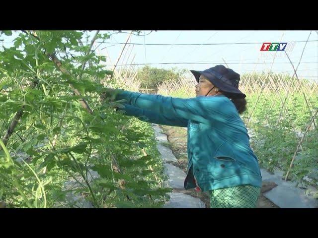 Tây Ninh ổn định diện tích rau màu vụ hè thu | NÔNG NGHIỆP TÂY NINH | TayNinhTV