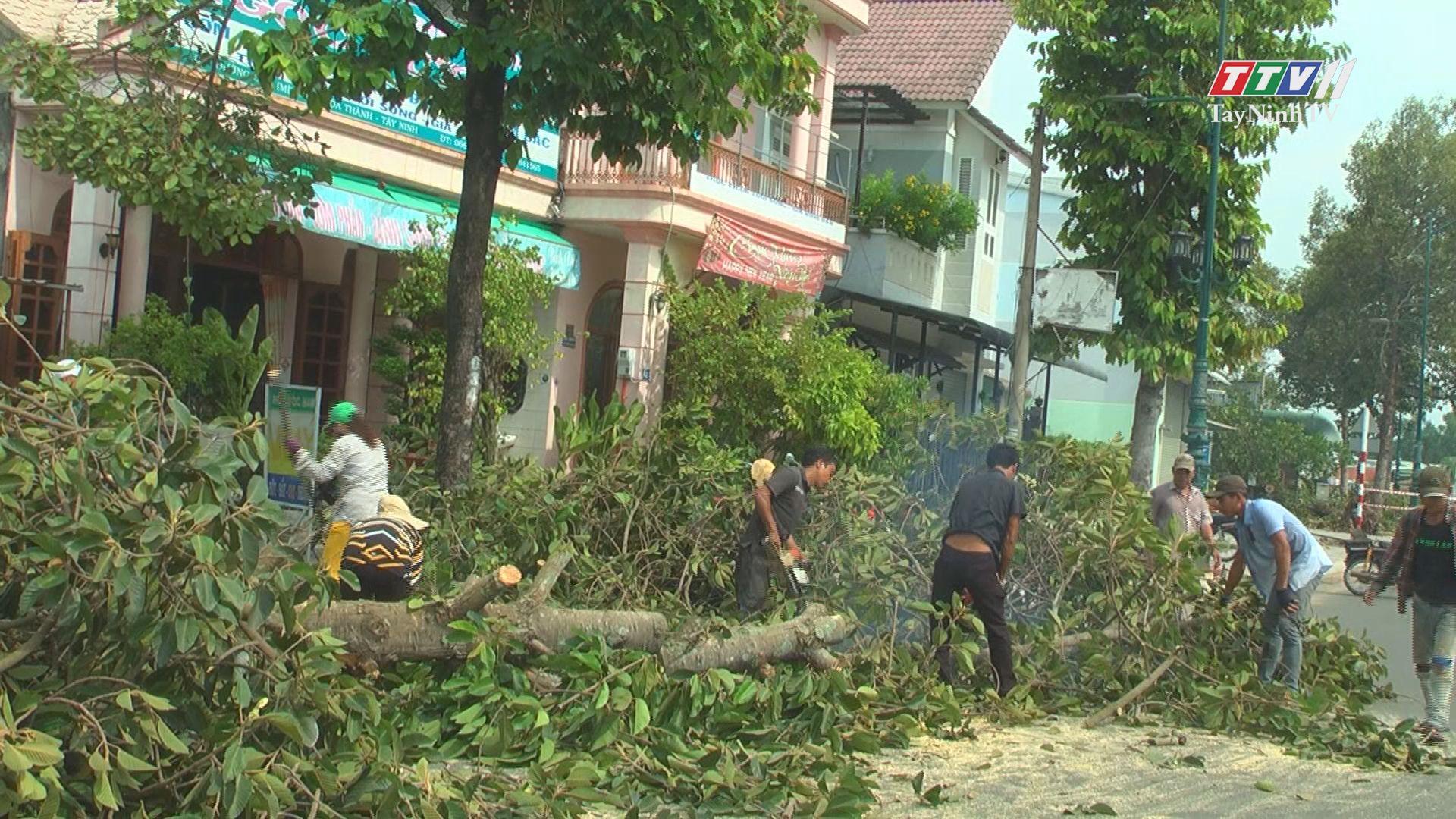 Đảm bảo an toàn mùa mưa bão | TIẾNG NÓI CỬ TRI | TayNinhTV