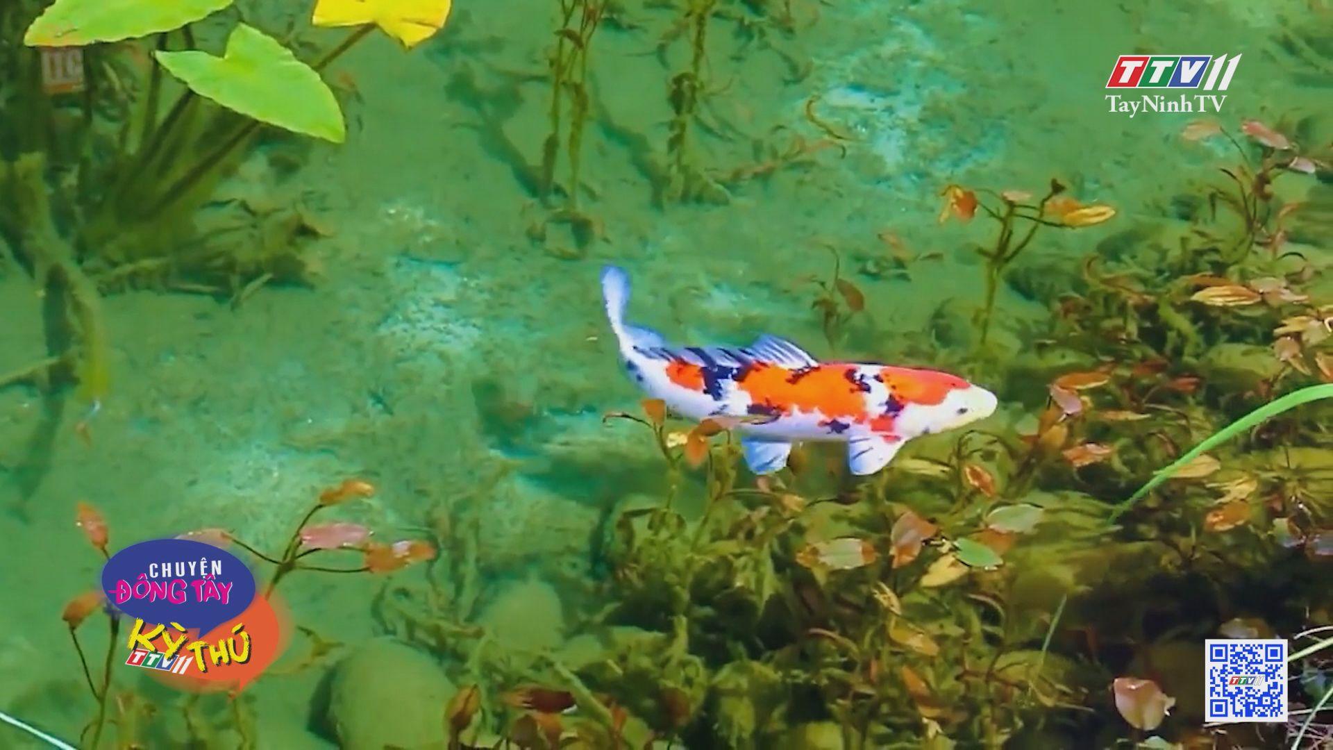 Hồ nước đẹp như tranh vẽ | CHUYỆN ĐÔNG TÂY KỲ THÚ | TayNinhTV