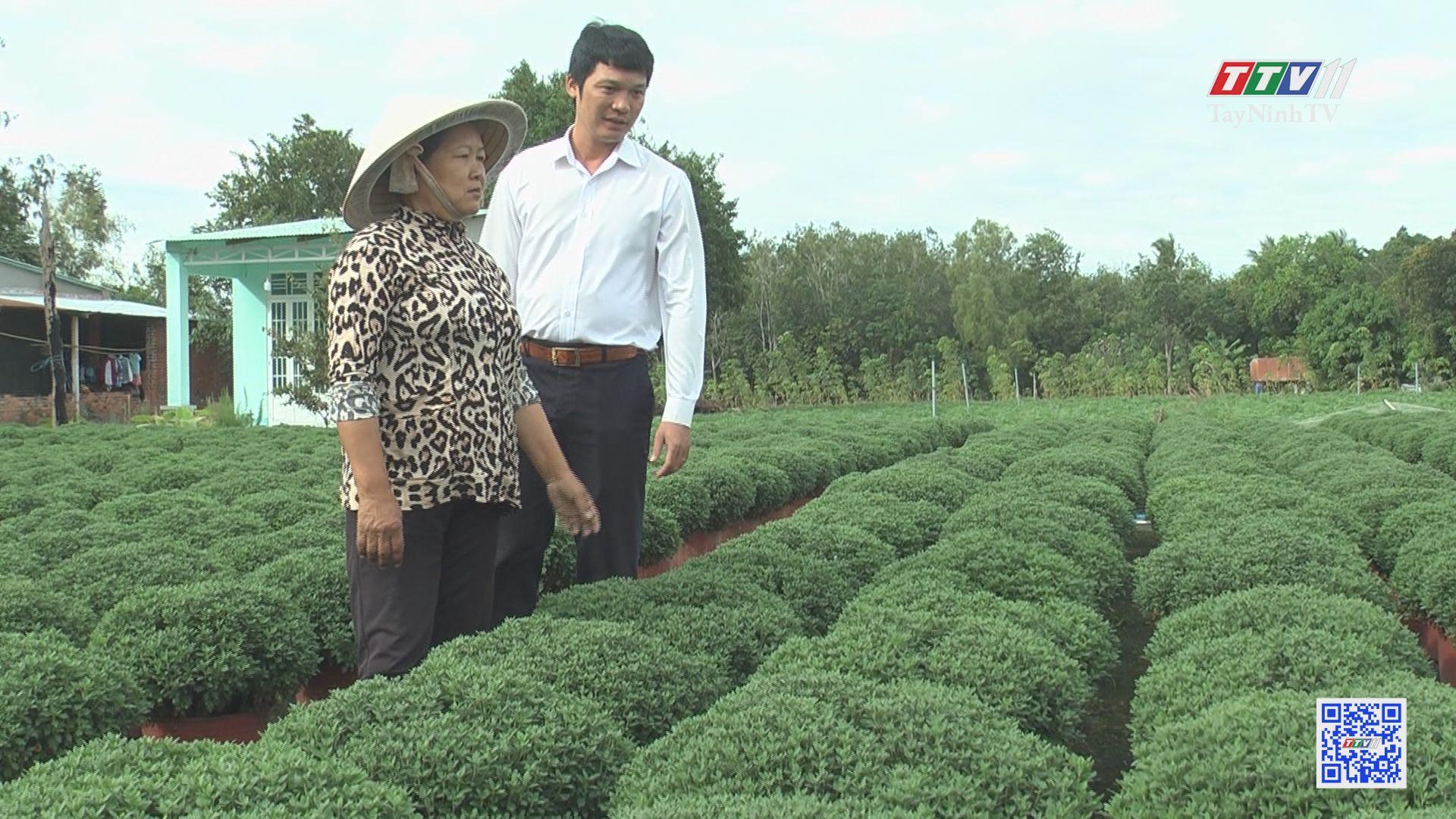 Làng hoa kiểng An Cơ đón Tết | NÔNG NGHIỆP TÂY NINH | TayNinhTV