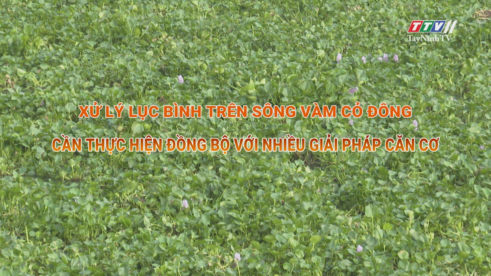 Giải pháp xử lý lục bình trên sông Vàm Cỏ Đông | TIẾNG NÓI CỬ TRI | TayNinhTV