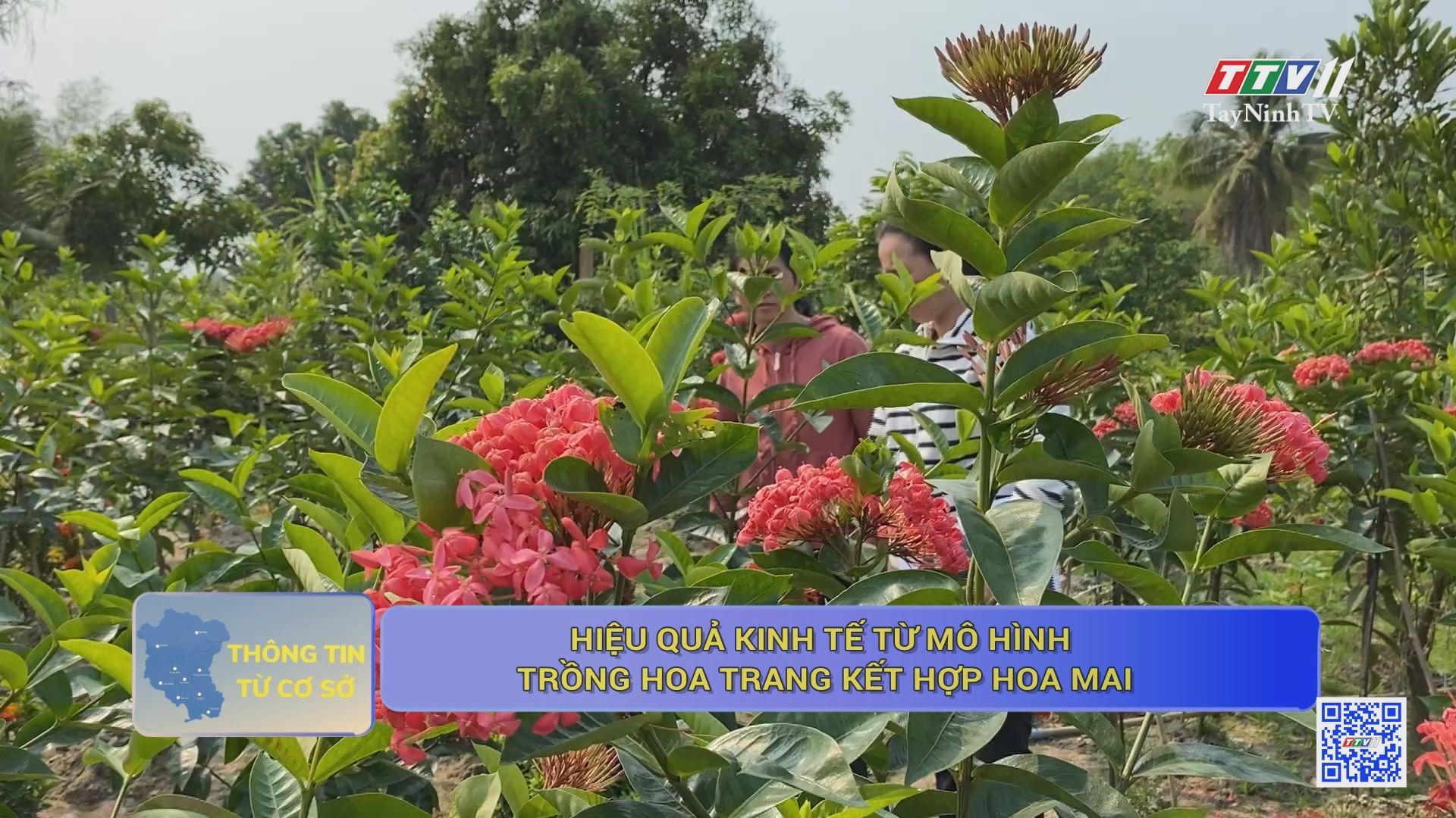 Hiệu quả kinh tế từ mô hình trồng hoa trang kết hợp hoa mai | THÔNG TIN TỪ CƠ SỞ | TayNinhTV