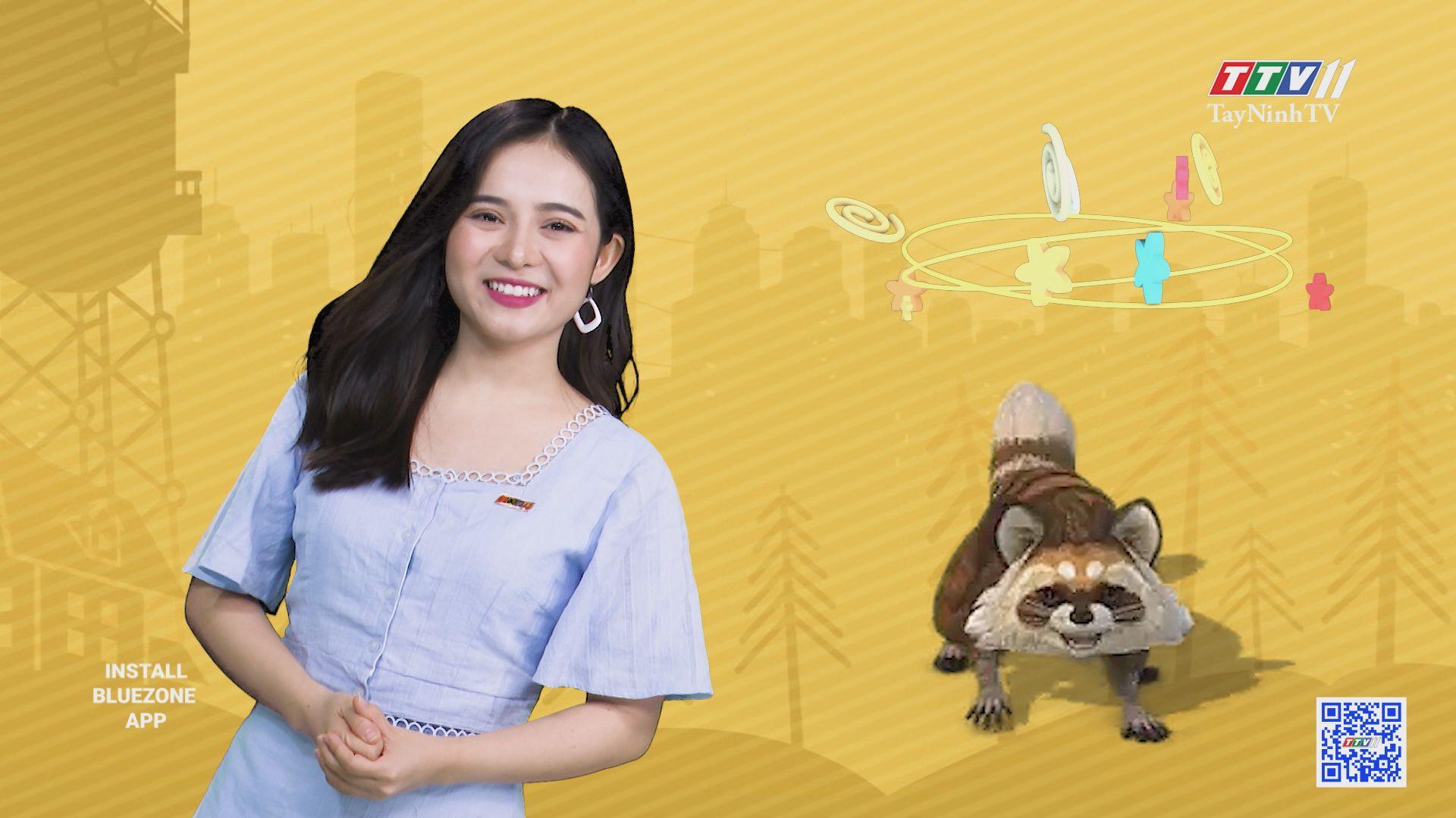 Chú gấu mèo Mỹ với những màn trình diễn độc đáo | CHUYỆN ĐÔNG TÂY KỲ THÚ | TayNinhTV
