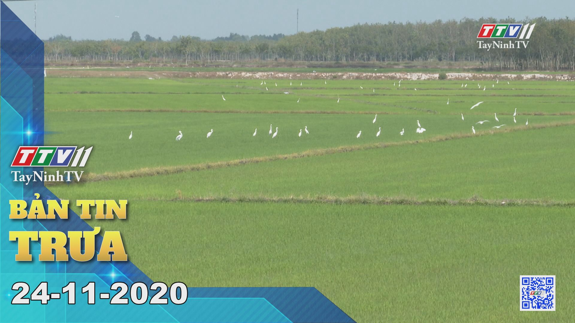 Bản tin trưa 24-11-2020 | Tin tức hôm nay | TayNinhTV