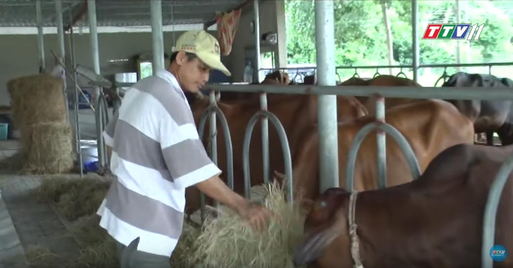 Nông Nghiệp Tây Ninh | Hiệu quả từ các dòng bê lai chuyên thịt
