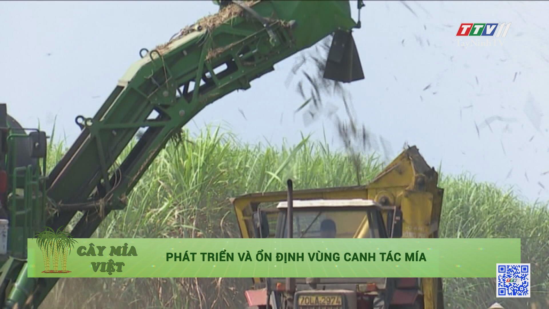 Phát triển và ổn định vùng canh tác mía | CÂY MÍA VIỆT | TayNinhTV