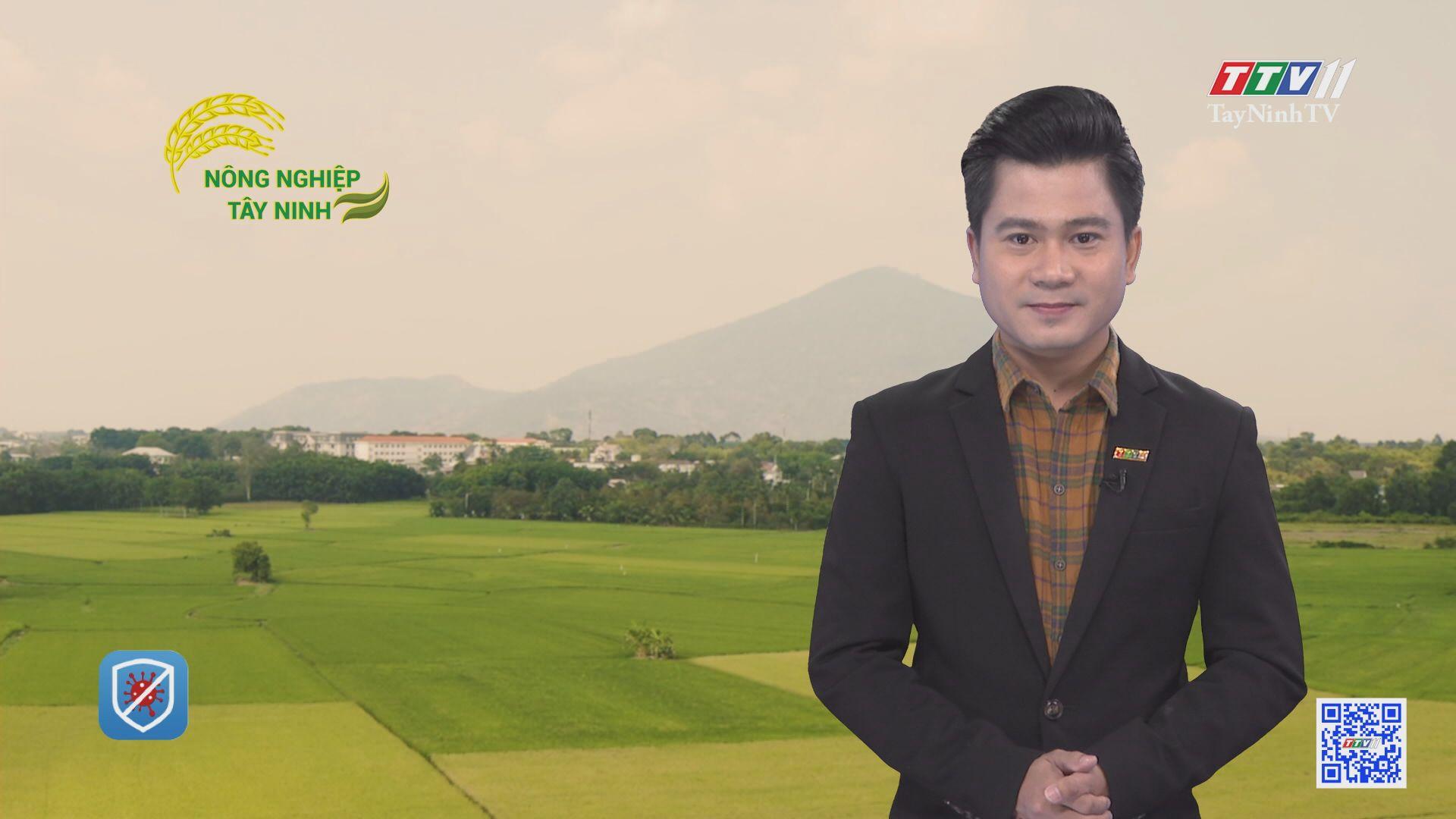 Xã Trường Đông hướng tới chuẩn nông thôn mới nâng cao | NÔNG NGHIỆP TÂY NINH | TayNinhTV