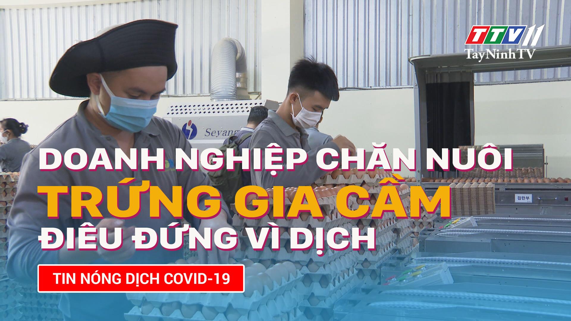 Doanh nghiệp chăn nuôi trứng gia cầm điêu đứng vì dịch | TayNinhTV