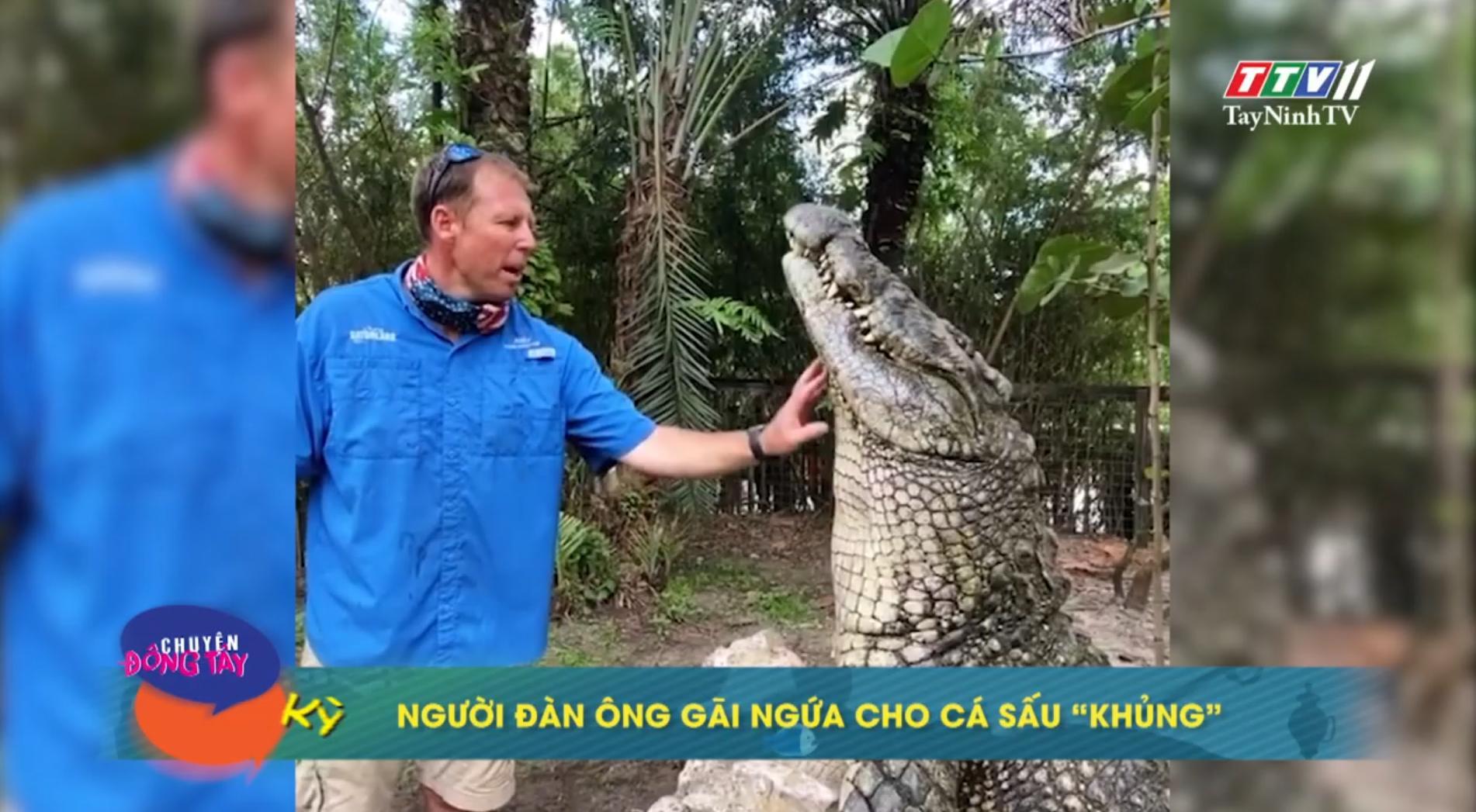 Người đàn ông gãi ngứa cho cá sấu