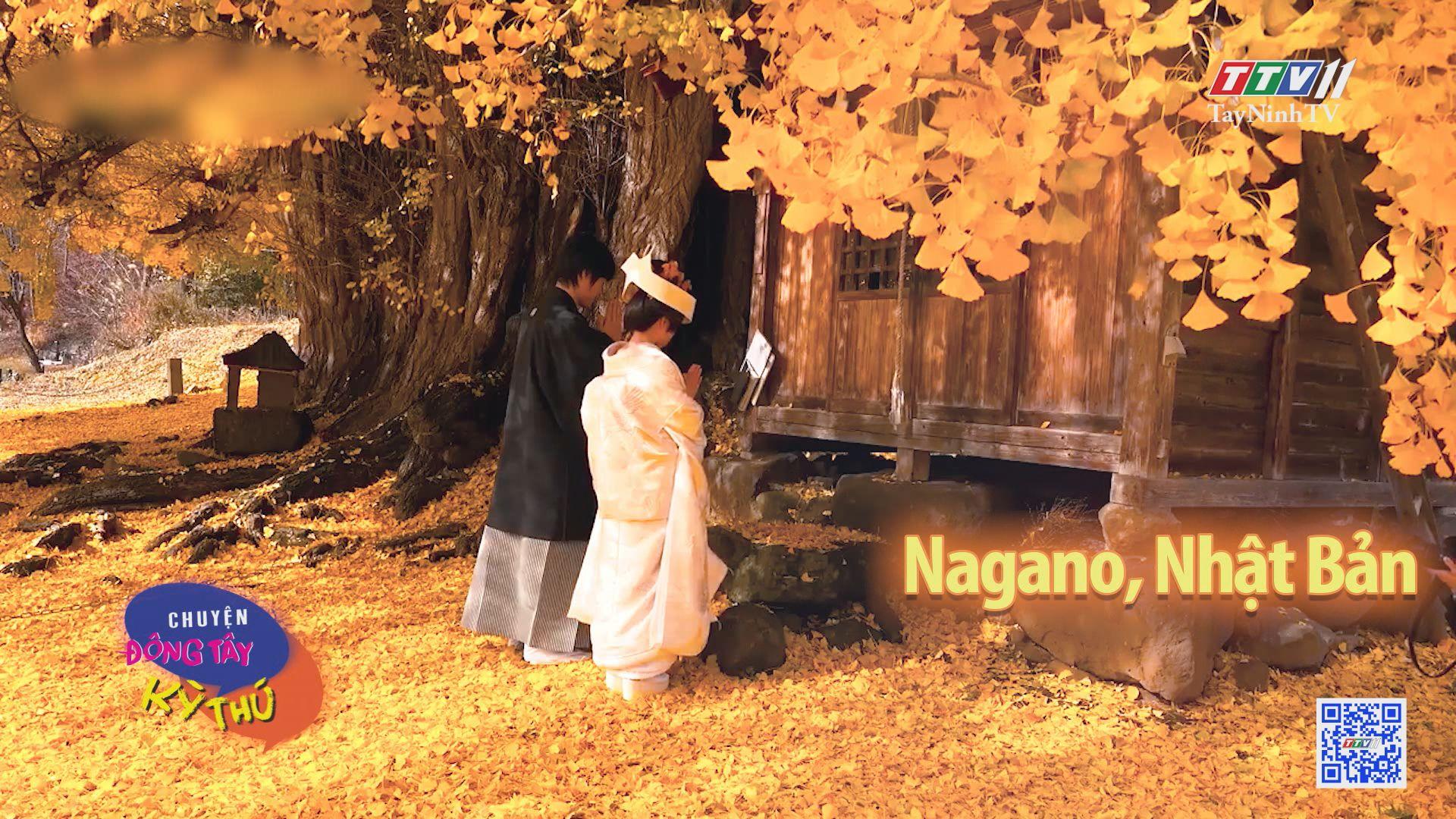 Báu vật mùa thu tuyệt đẹp ở Nhật Bản | CHUYỆN ĐÔNG TÂY KỲ THÚ | TayNinhTV