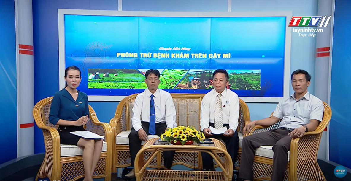 PHÒNG TRỪ BỆNH KHẢM TRÊN CÂY MÌ | CHUYỆN NHÀ NÔNG | Tây Ninh TV