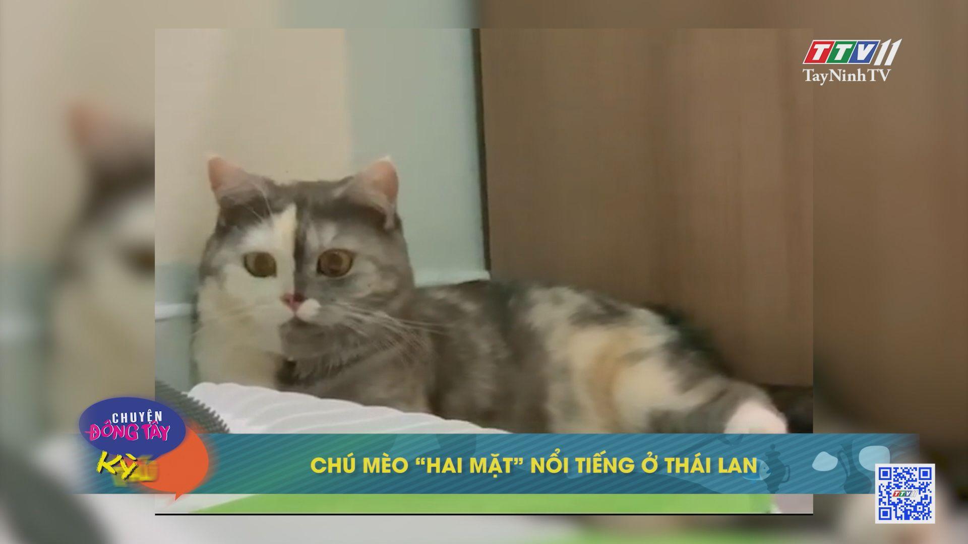 Chú mèo
