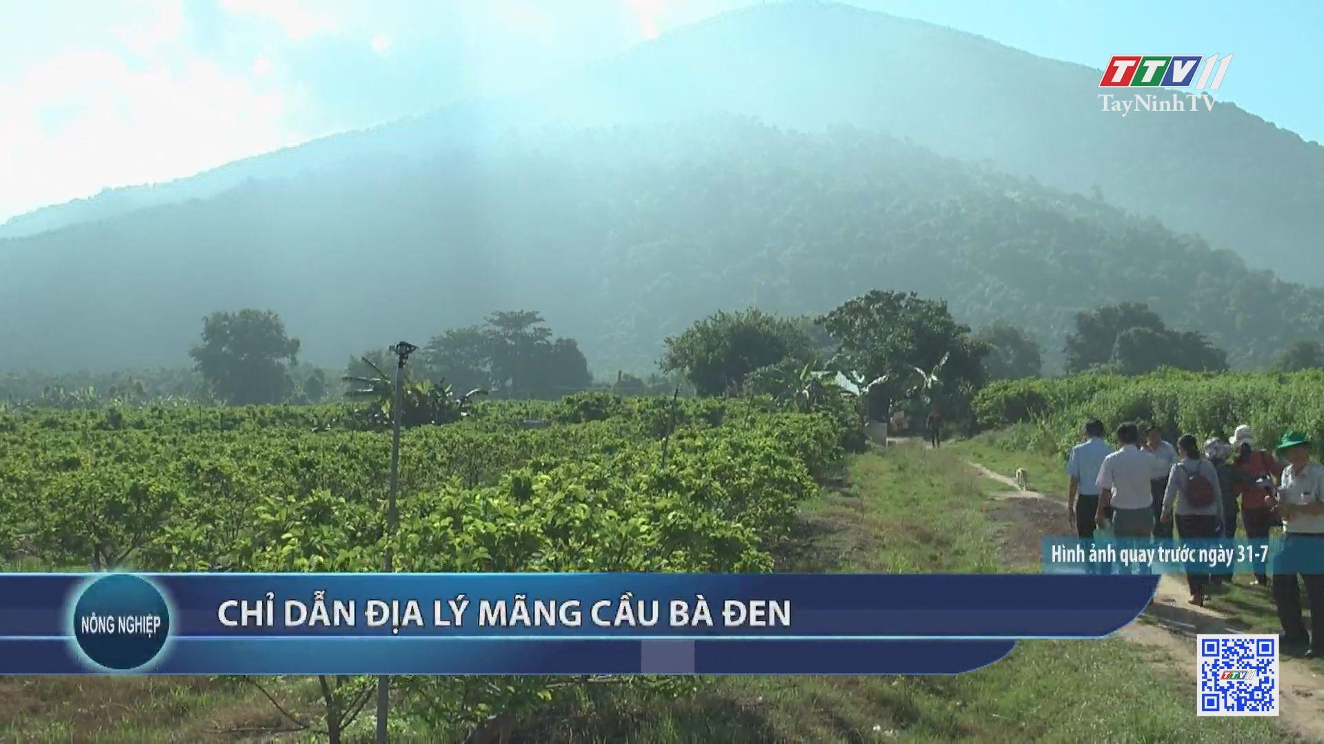Chỉ dẫn địa lý mãng cầu Bà Đen | NÔNG NGHIỆP TÂY NINH | TayNinhTV