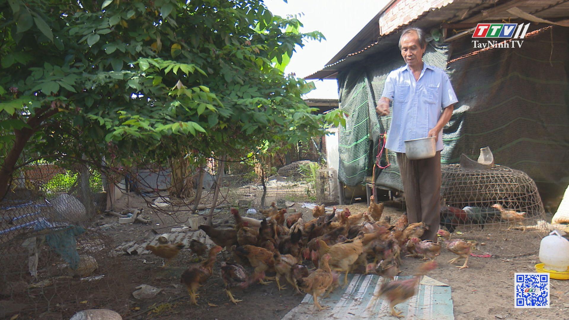 Tạo sinh kế cho người nghèo | GIẢM NGHÈO BỀN VỮNG | TayNinhTV