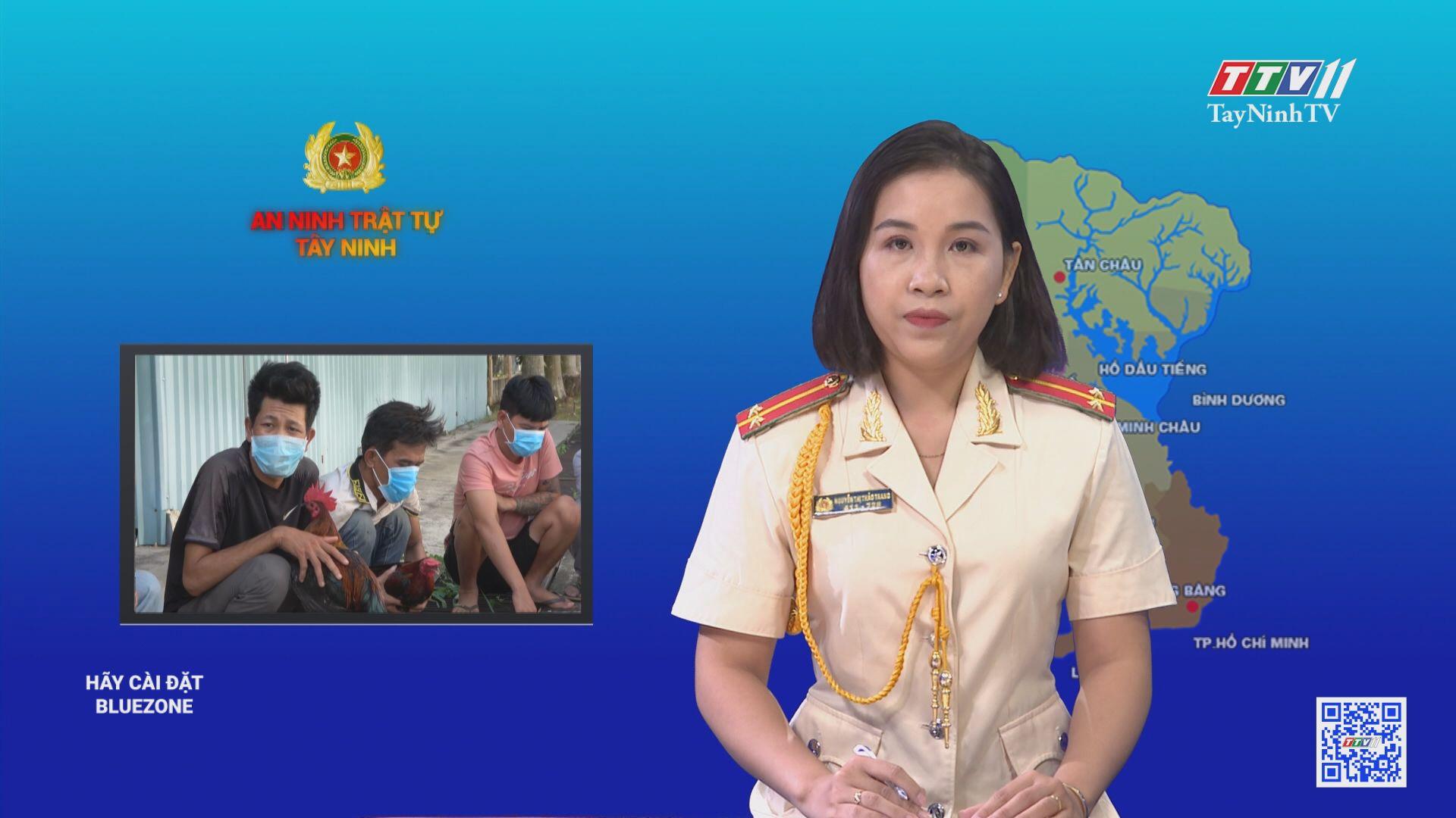 Công an huyện Tân Châu: triệt xóa tụ điểm đánh bạc với hình thức đá gà | AN NINH TRẬT TỰ | TayNinhTV