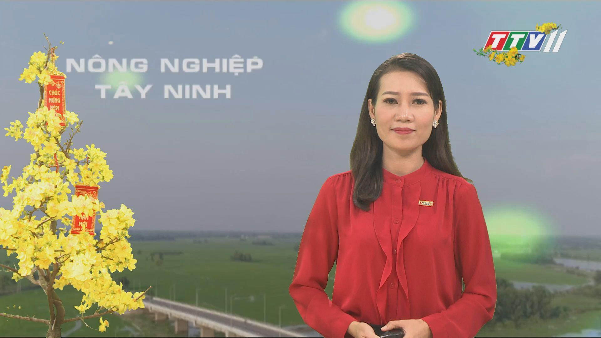 Những nông dân với nghề trồng - kinh doanh hoa kiểng | NÔNG NGHIỆP TÂY NINH | TayNinhTV