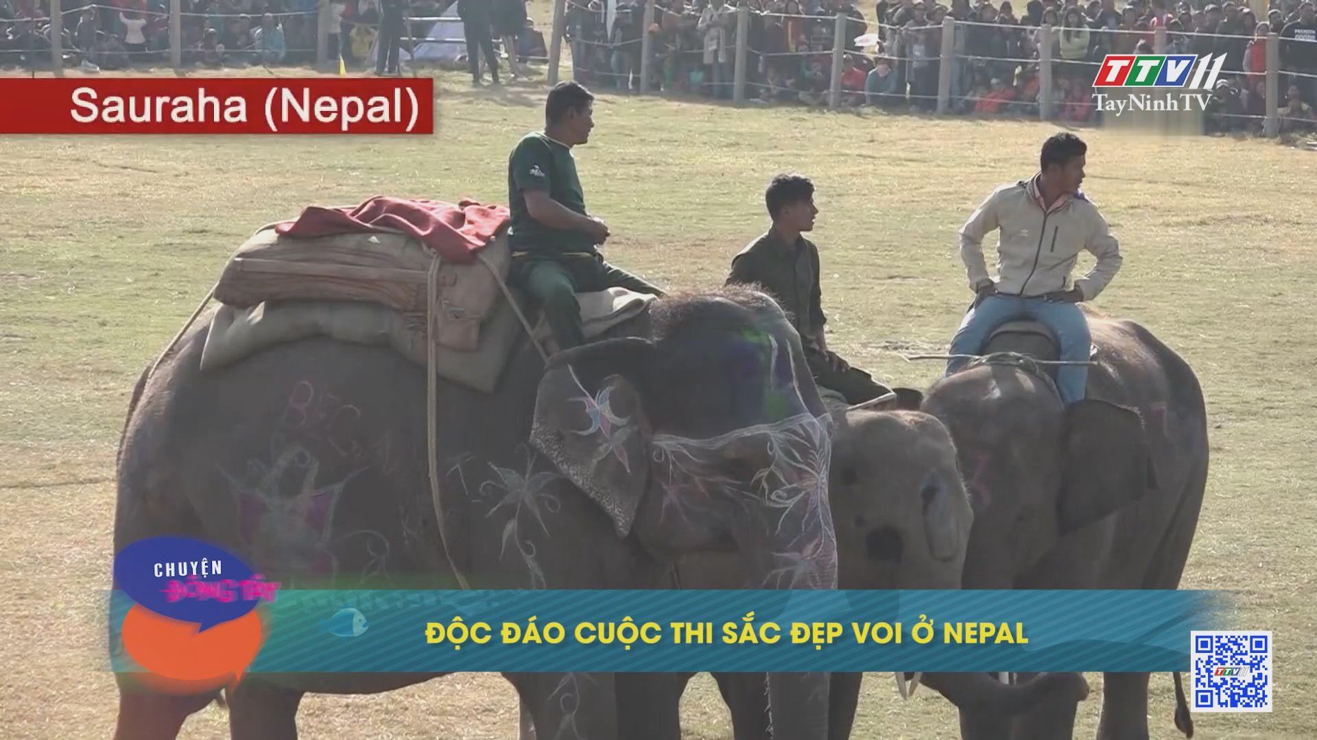 Độc đáo cuộc thi sắc đẹp voi ở Nepal   CHUYỆN ĐÔNG TÂY KỲ THÚ   TayNinhTVE