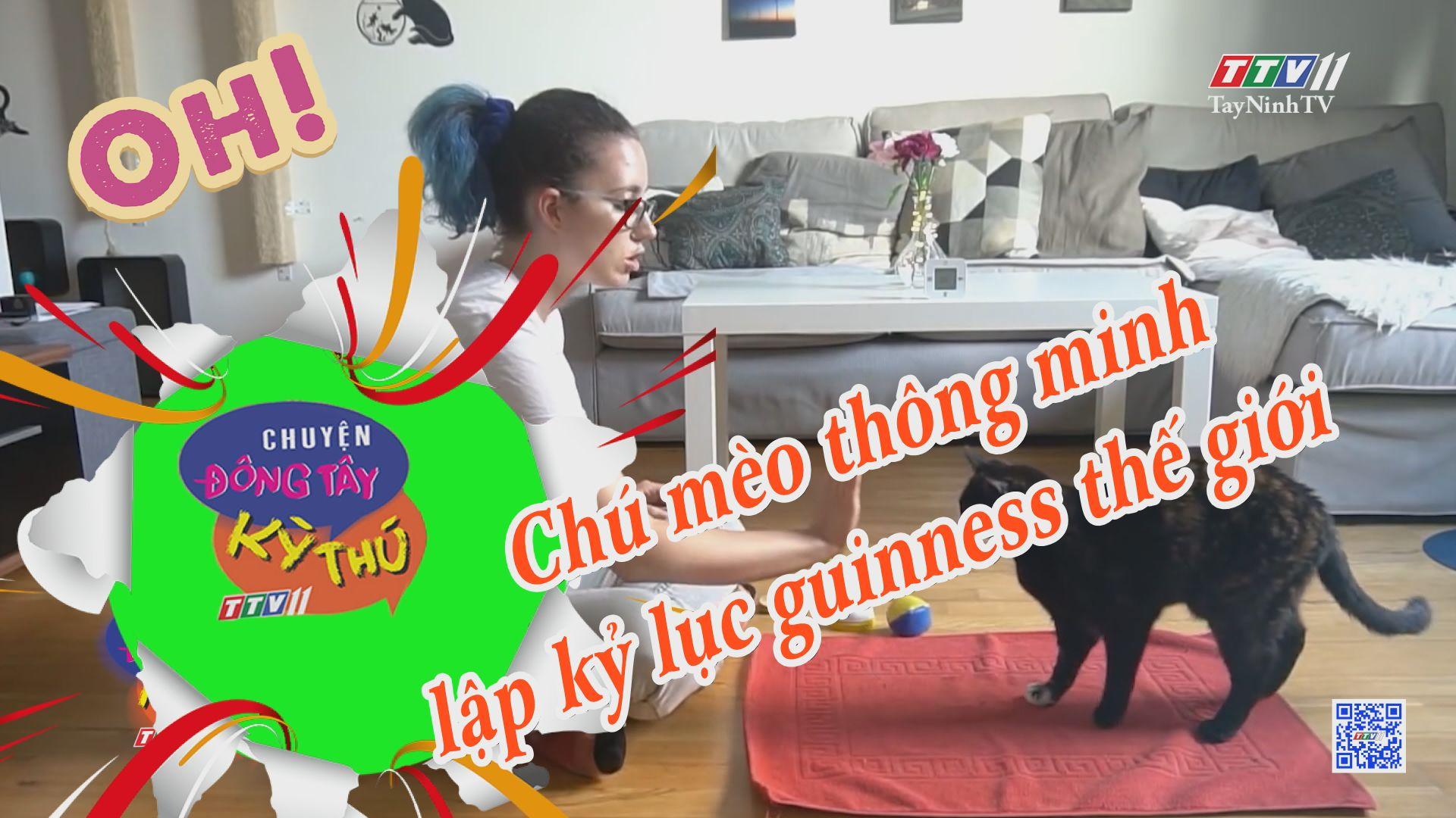 Chú mèo thông minh lập kỷ lục guinness thế giới | CHUYỆN ĐÔNG TÂY KỲ THÚ | TayNinhTVE
