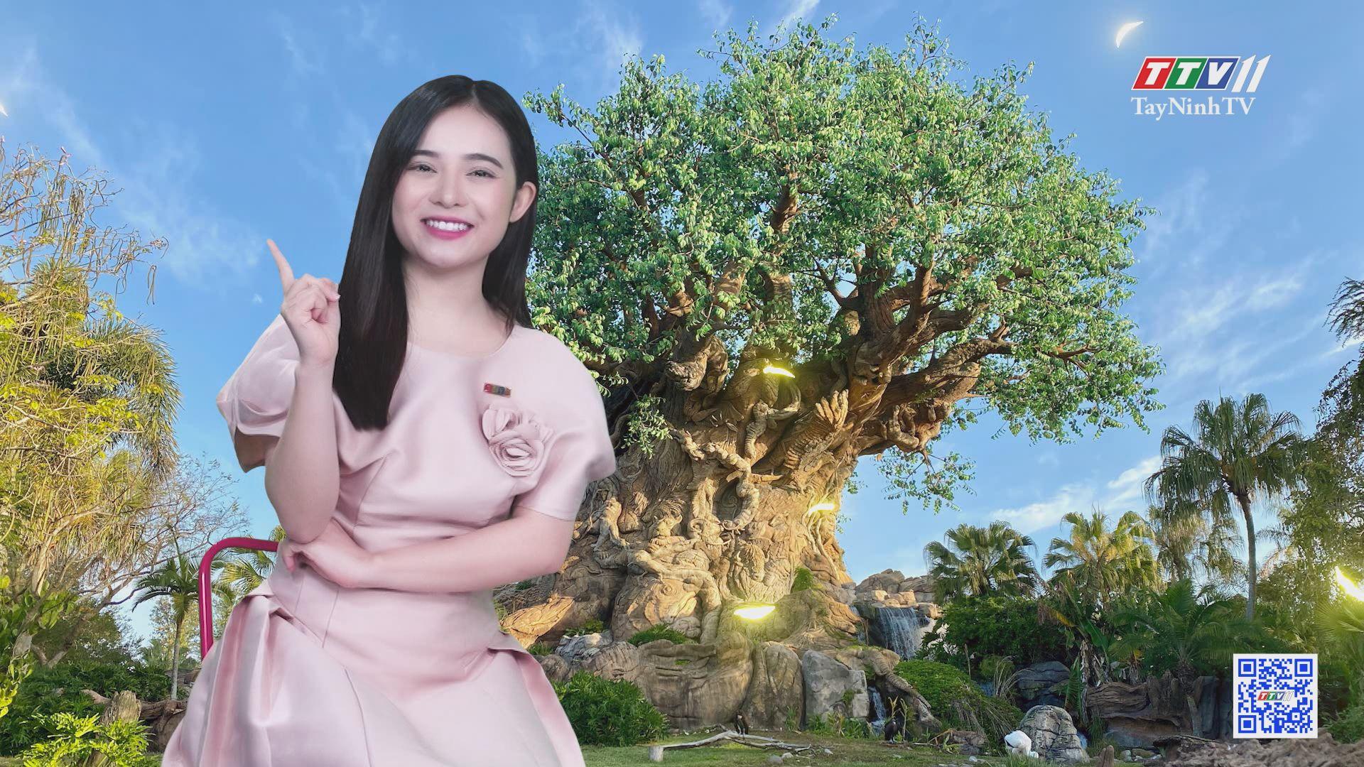 Kỳ lạ cây đại thụ nhân tạo như thật | CHUYỆN ĐÔNG TÂY KỲ THÚ | TayNinhTV