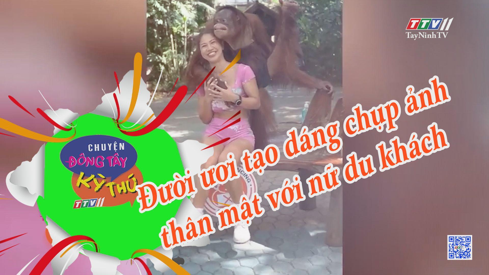 Đười ươi tạo dáng chụp ảnh thân mật với nữ du khách | CHUYỆN ĐÔNG TÂY KỲ THÚ | TayNinhTVE